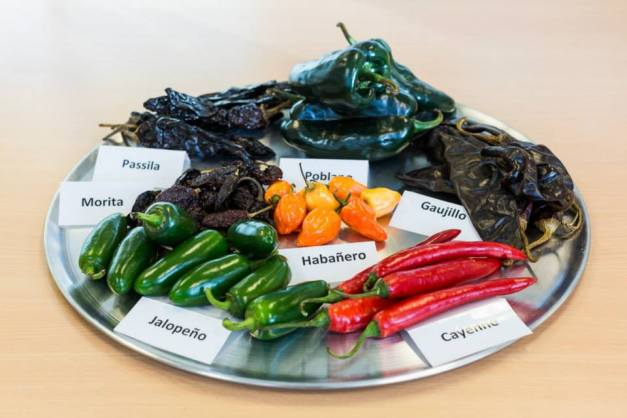 Chilli Selection